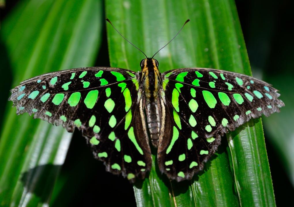 butterfly-339937_1920